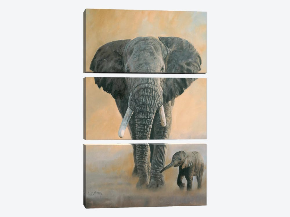 Elephant And Baby by David Stribbling 3-piece Canvas Art