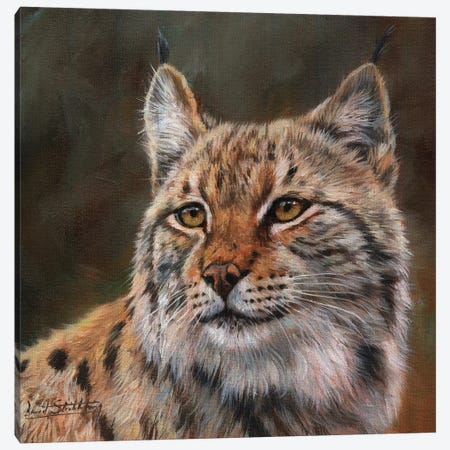 Eurasian Lynx Canvas Print #STG35} by David Stribbling Canvas Art