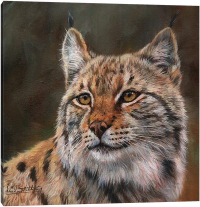 Eurasian Lynx Canvas Art Print