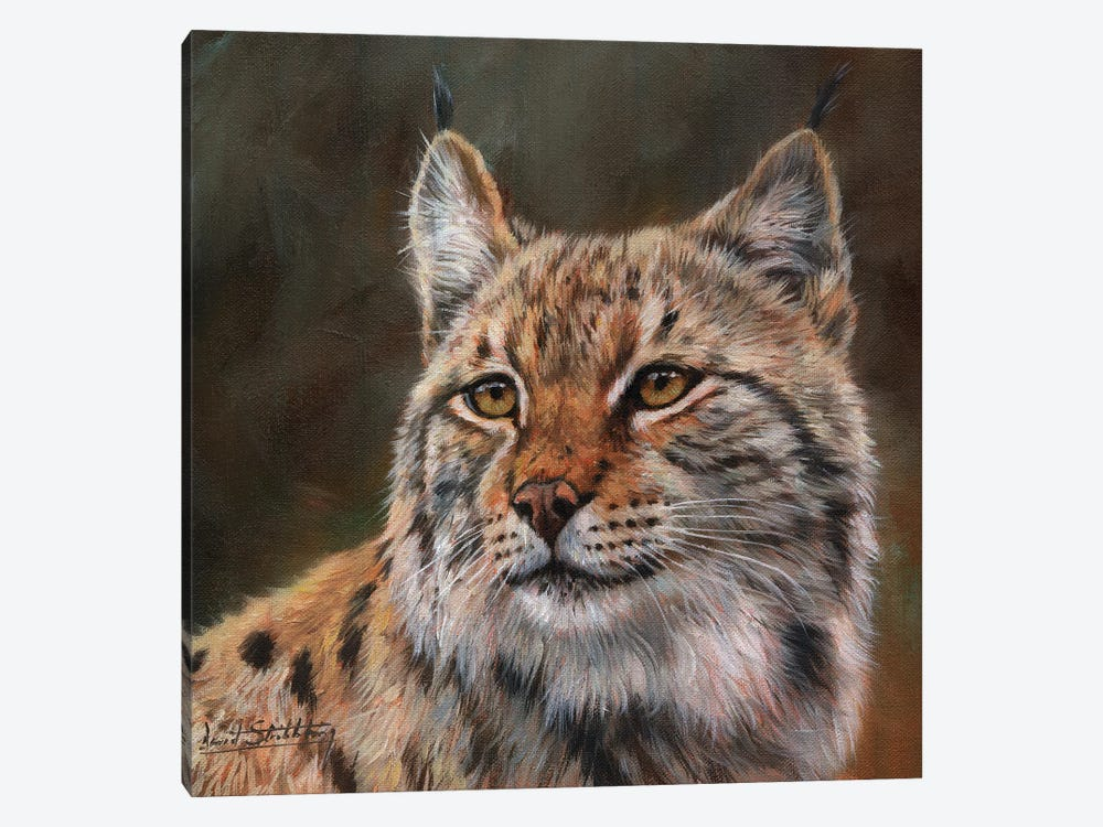 Eurasian Lynx by David Stribbling 1-piece Canvas Print