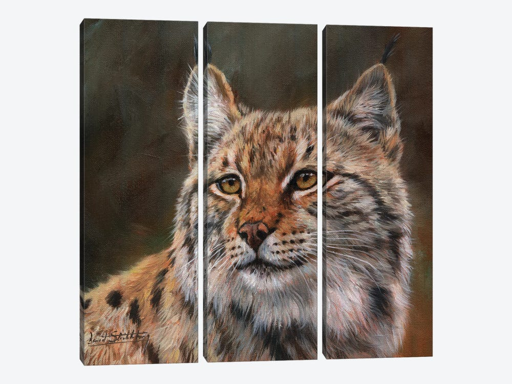 Eurasian Lynx by David Stribbling 3-piece Canvas Art Print