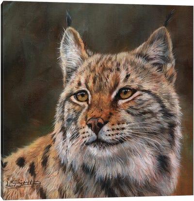 Eurasian Lynx Canvas Art Print