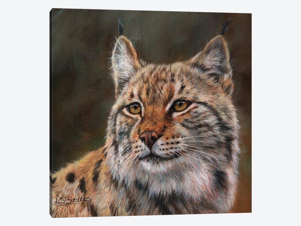 Eurasian Lynx by David Stribbling 1-piece Canvas Print