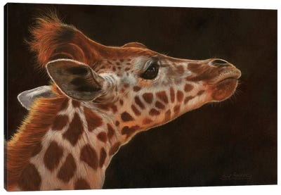 Giraffe Portrait I by David Stribbling Canvas Art Print