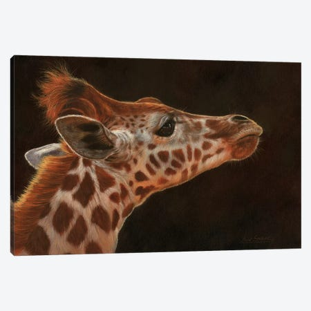 Giraffe Portrait I 3-Piece Canvas #STG38} by David Stribbling Canvas Print