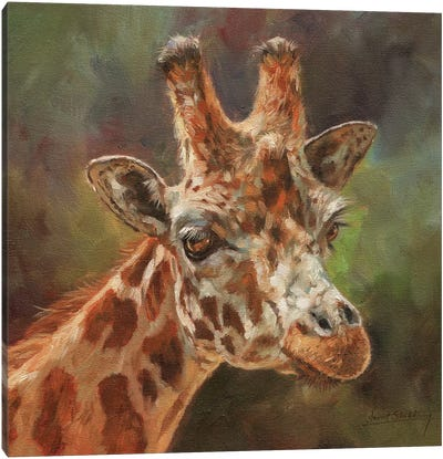 Giraffe Portrait II Canvas Art Print