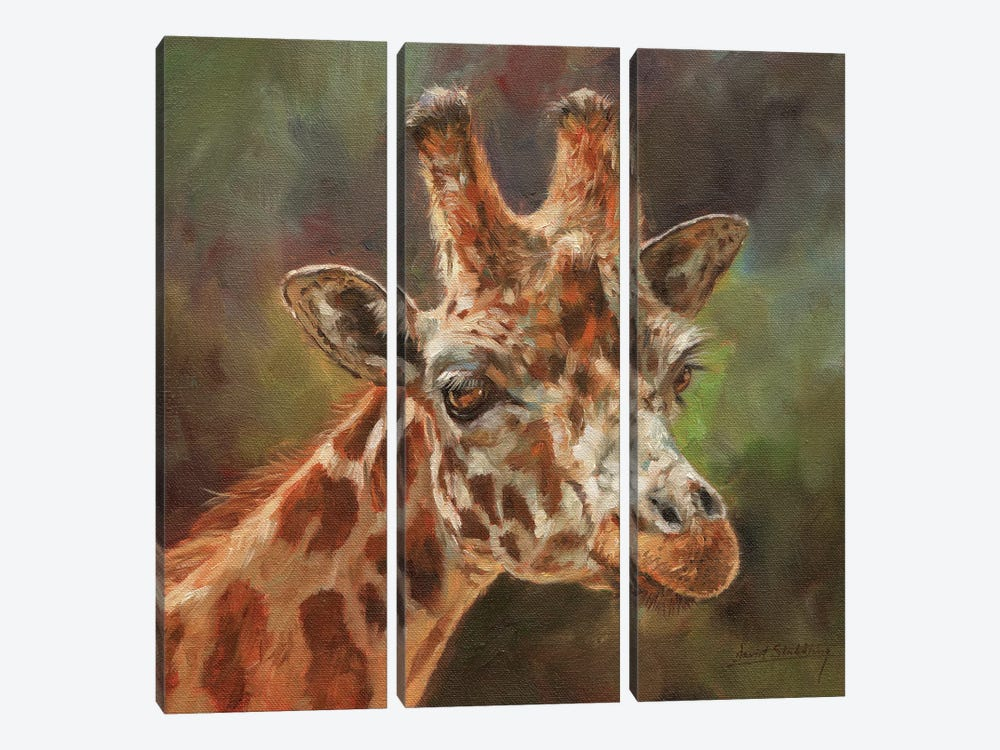 Giraffe Portrait II by David Stribbling 3-piece Canvas Art Print