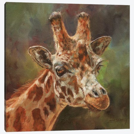 Giraffe Portrait II Canvas Print #STG39} by David Stribbling Art Print