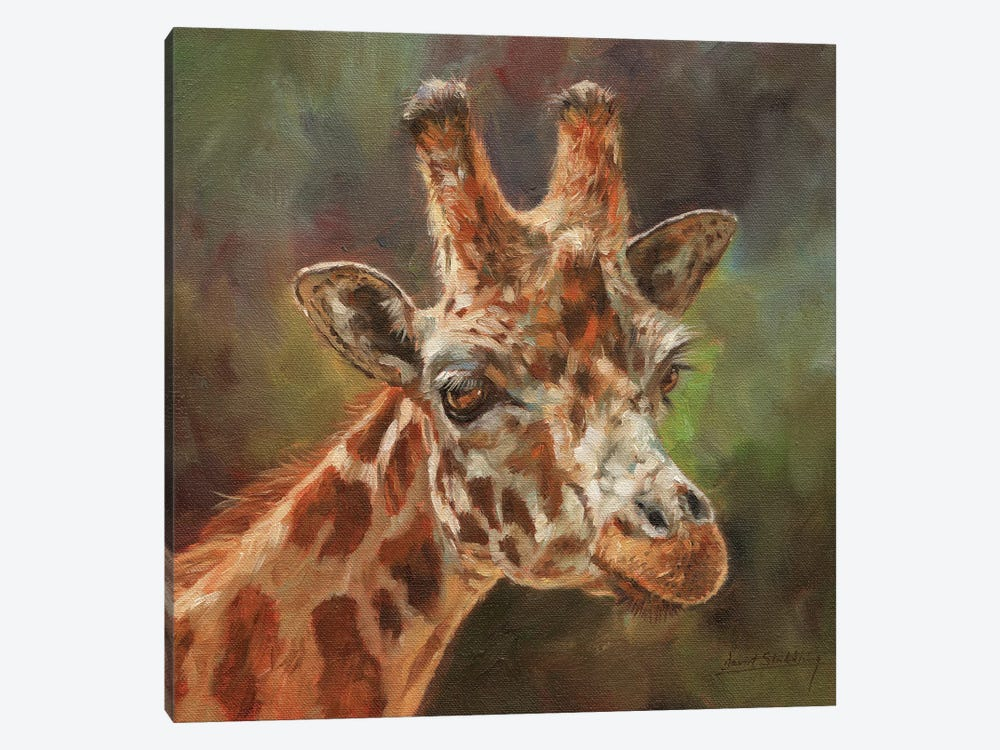 Giraffe Portrait II by David Stribbling 1-piece Canvas Print