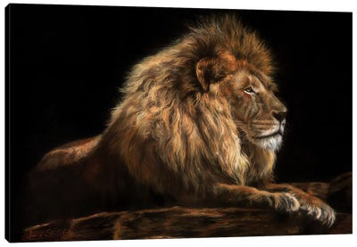 Golden Lion Canvas Art Print