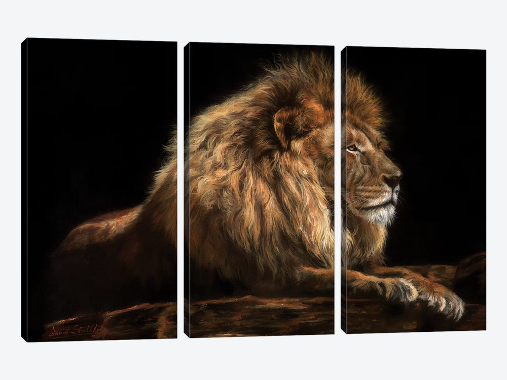 Golden Lion by David Stribbling 3-piece Canvas Print