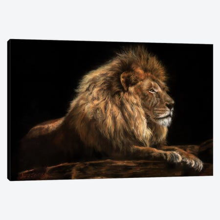 Golden Lion Canvas Print #STG40} by David Stribbling Canvas Artwork
