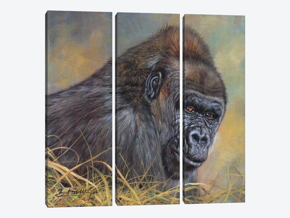 Gorilla by David Stribbling 3-piece Canvas Artwork