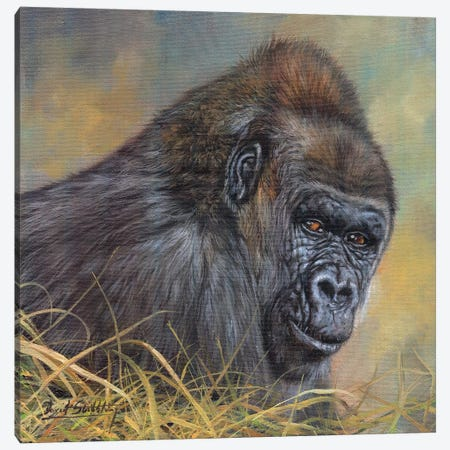 Gorilla Canvas Print #STG41} by David Stribbling Canvas Artwork