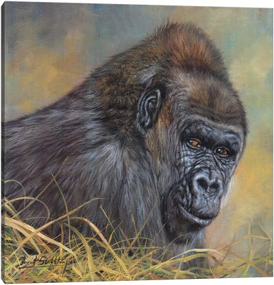 Gorilla by David Stribbling Canvas Art Print