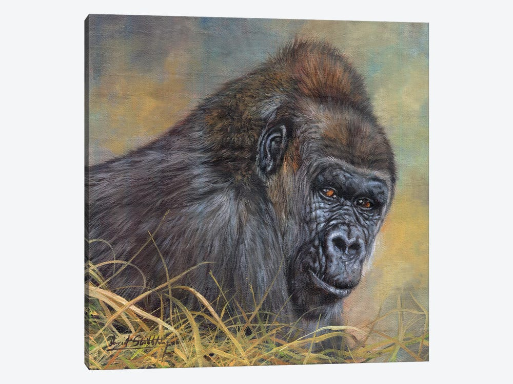 Gorilla by David Stribbling 1-piece Canvas Artwork