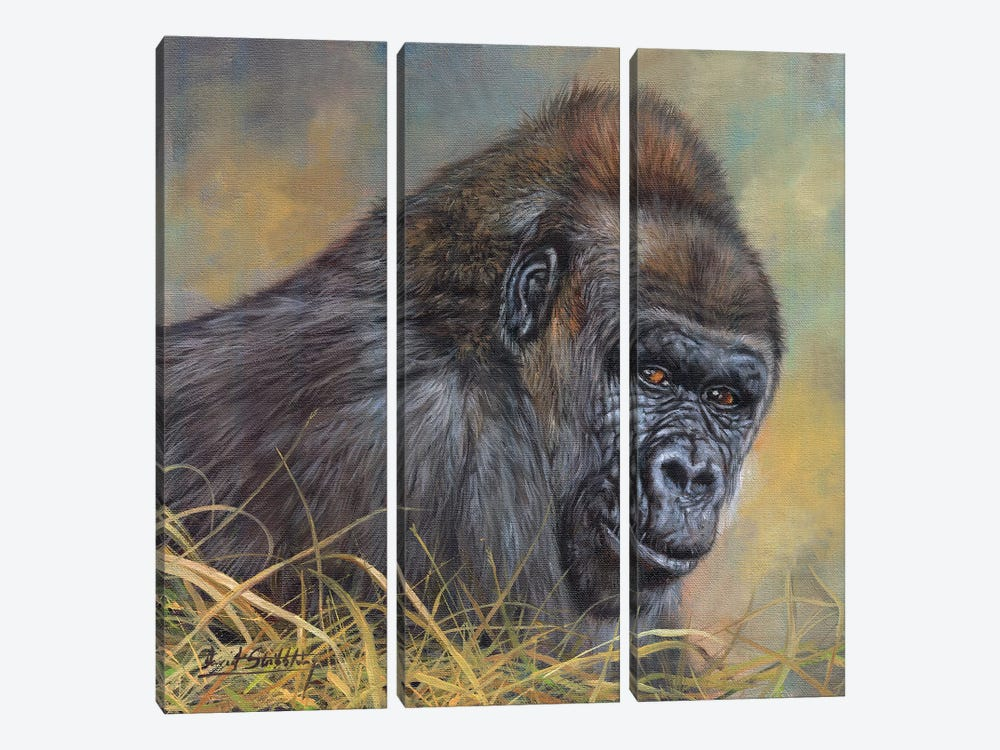 Gorilla by David Stribbling 3-piece Canvas Artwork