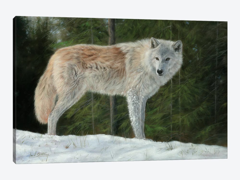 Grey Wolf In Snow by David Stribbling 1-piece Art Print