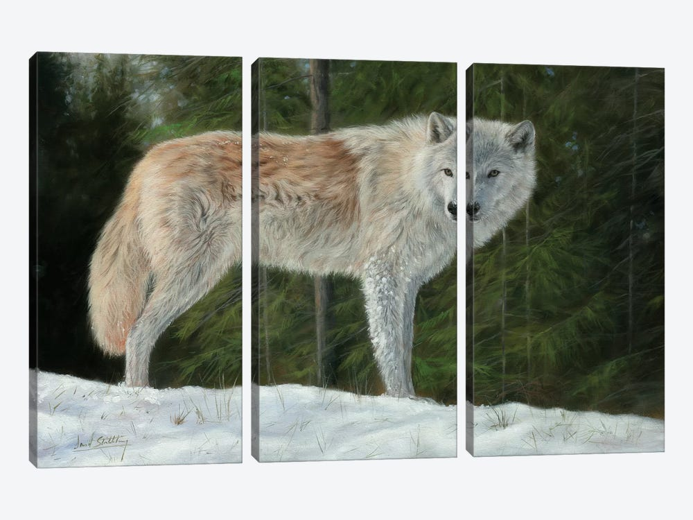 Grey Wolf In Snow by David Stribbling 3-piece Canvas Art Print
