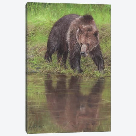 Grizzly Bear At Water's Edge Canvas Print #STG43} by David Stribbling Canvas Art