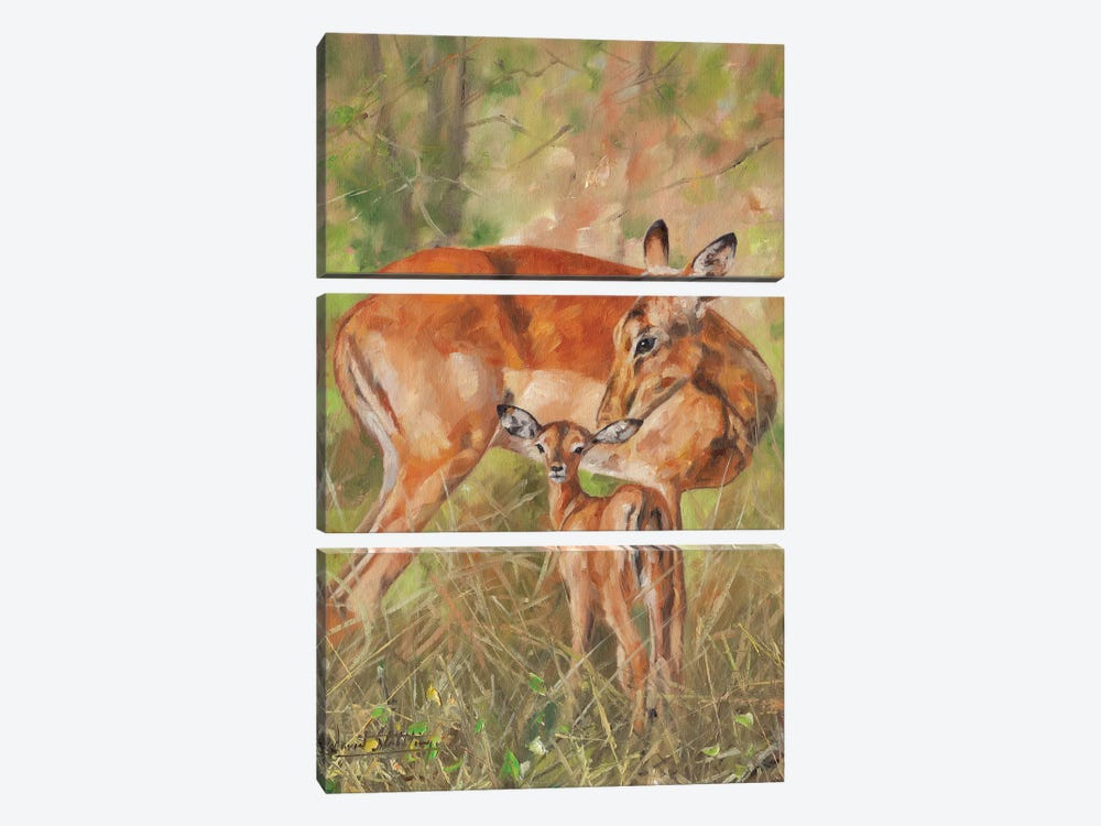 Impala And Young by David Stribbling 3-piece Canvas Artwork