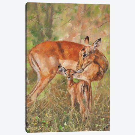 Impala And Young 3-Piece Canvas #STG45} by David Stribbling Canvas Print