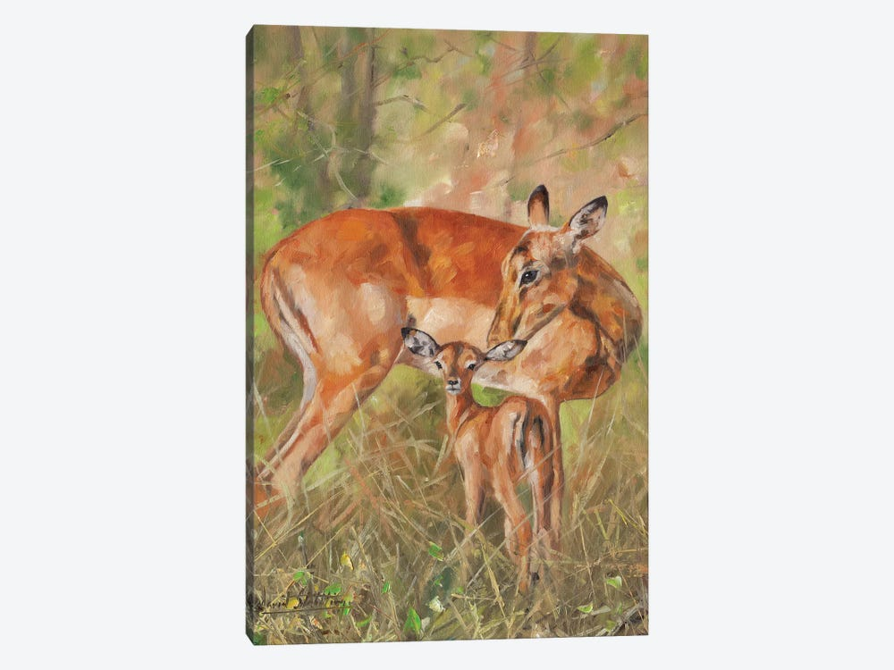 Impala And Young by David Stribbling 1-piece Canvas Art