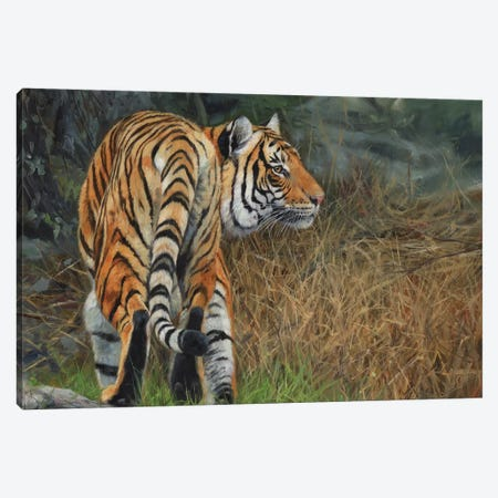 Indo Chinese Tiger Canvas Print #STG46} by David Stribbling Art Print