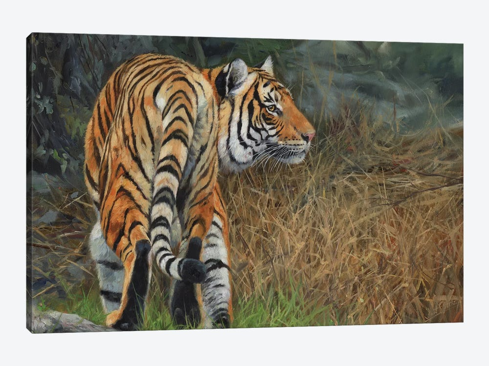 Indo Chinese Tiger by David Stribbling 1-piece Canvas Print