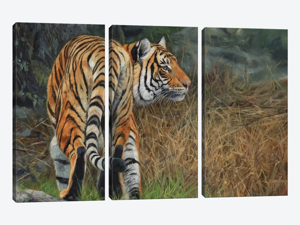 Indo Chinese Tiger by David Stribbling 3-piece Canvas Print