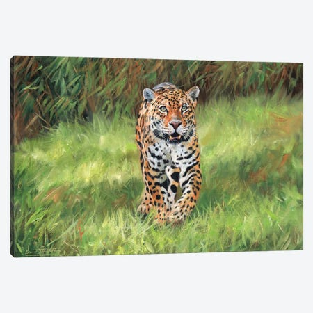 Jaguar Big Cat I Canvas Print #STG47} by David Stribbling Canvas Art Print