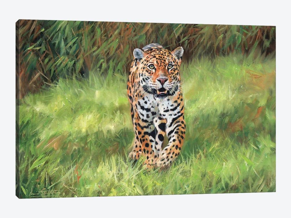 Jaguar Big Cat I by David Stribbling 1-piece Canvas Artwork