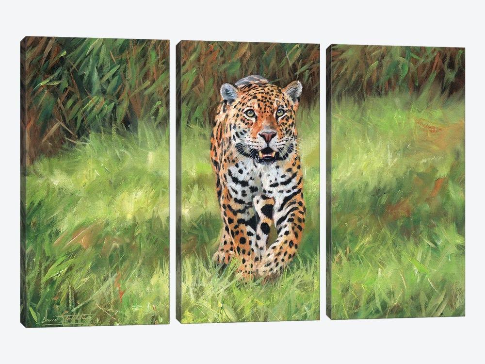 Jaguar Big Cat I by David Stribbling 3-piece Canvas Art