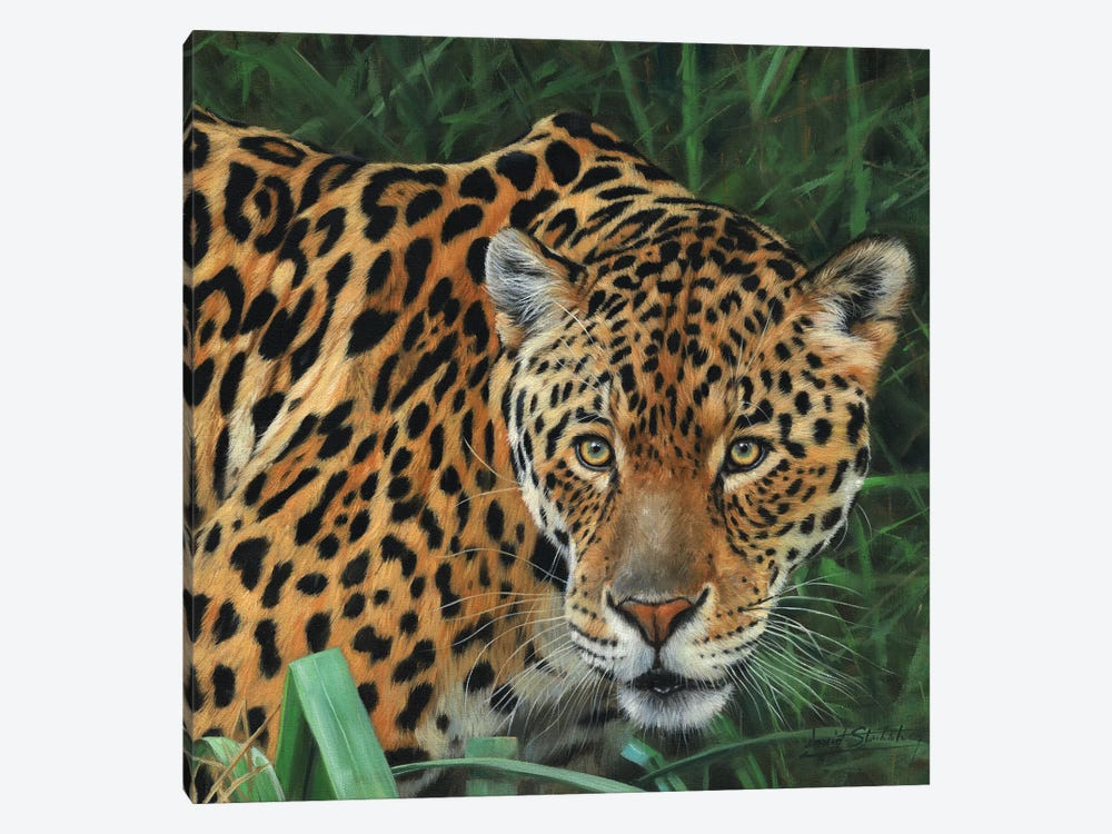 Jaguar Big Cat II by David Stribbling 1-piece Canvas Print