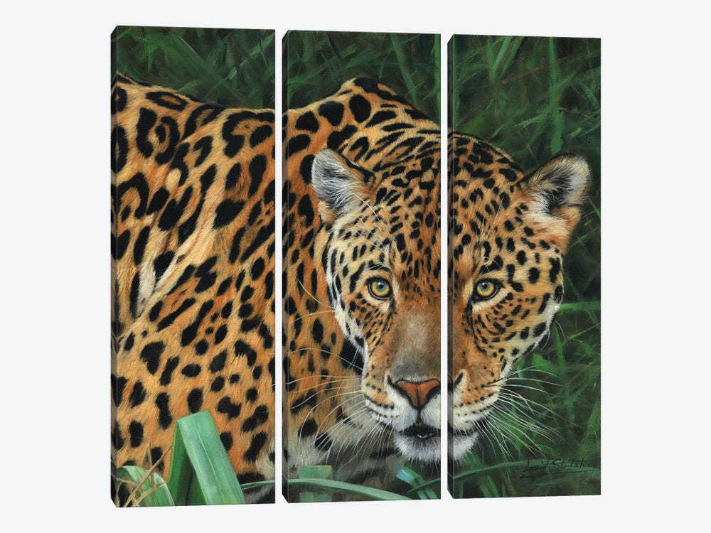 Jaguar Big Cat II by David Stribbling 3-piece Canvas Art Print