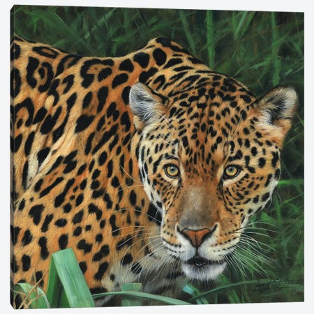 Jaguar Big Cat II Canvas Print #STG48} by David Stribbling Canvas Art