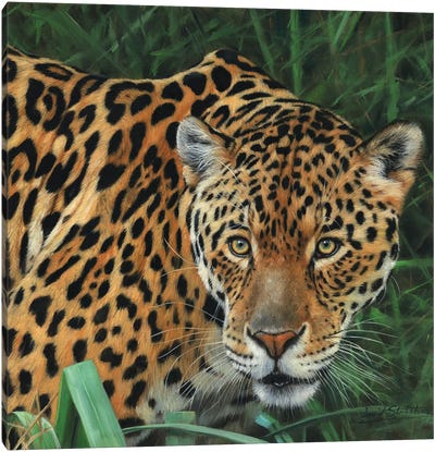 Jaguar Big Cat II Canvas Art Print