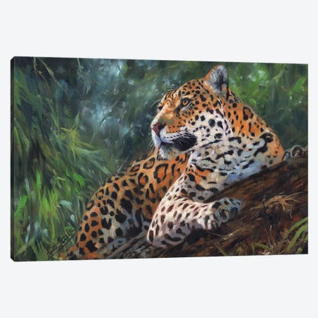 Jaguar In Tree Canvas Print #STG49} by David Stribbling Canvas Wall Art