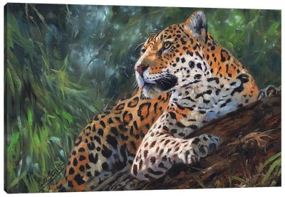 Jaguar In Tree by David Stribbling Canvas Art Print