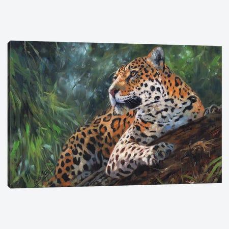 Jaguar In Tree Canvas Print #STG49} by David Stribbling Canvas Wall Art