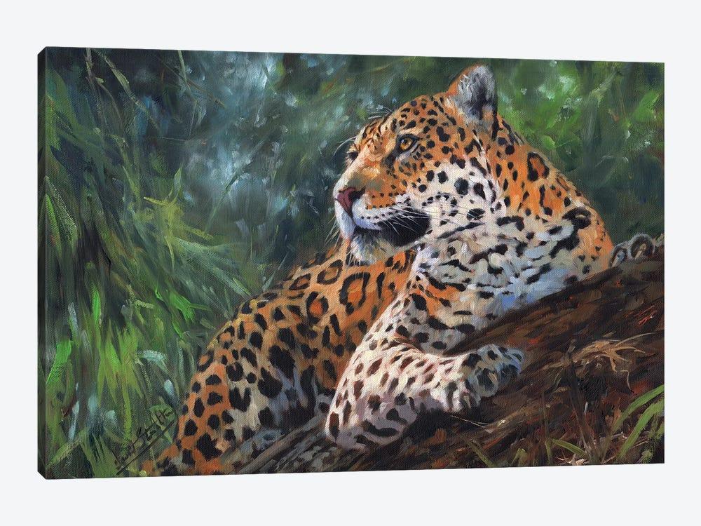 Jaguar In Tree by David Stribbling 1-piece Canvas Wall Art