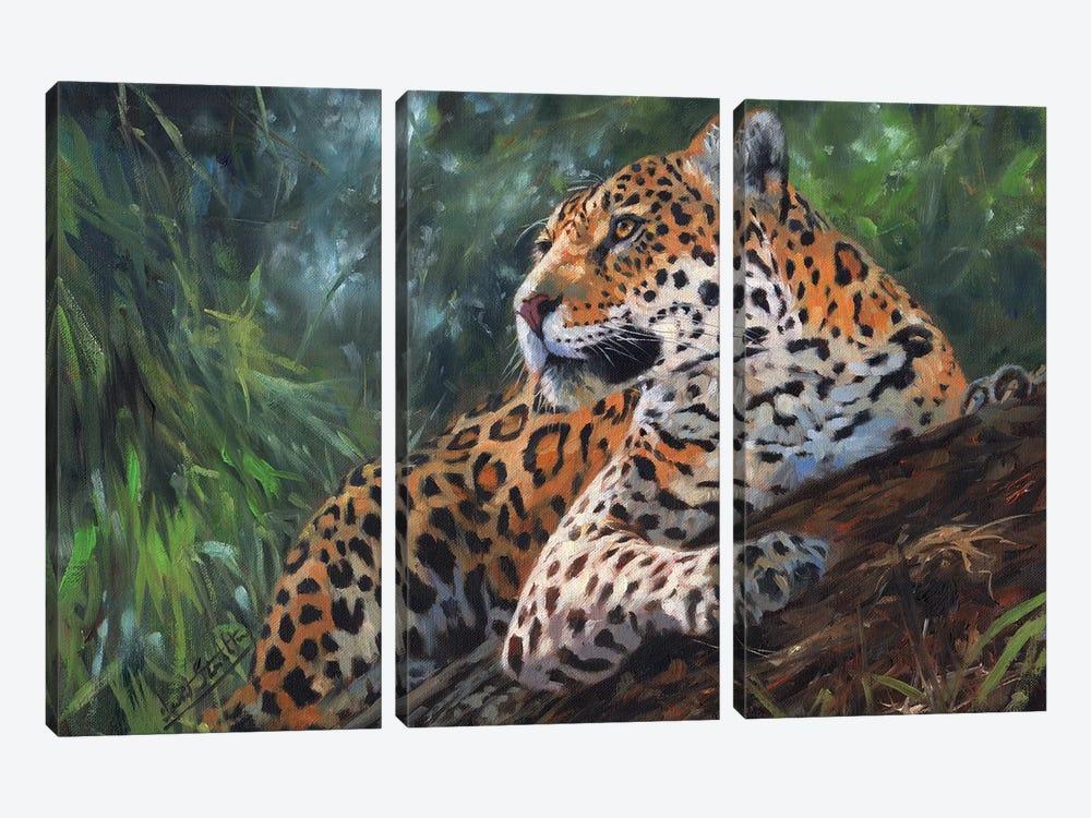 Jaguar In Tree by David Stribbling 3-piece Canvas Wall Art