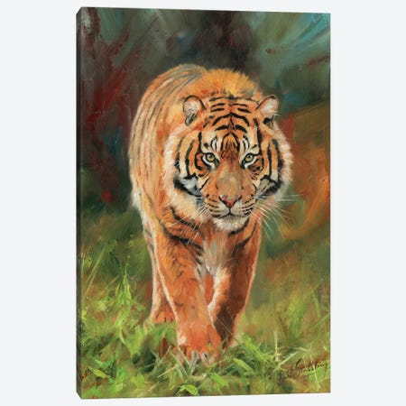 Amur Tiger Canvas Print #STG4} by David Stribbling Canvas Art