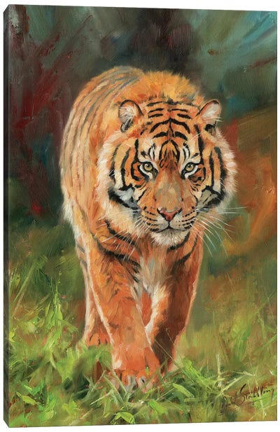 Amur Tiger by David Stribbling Canvas Art Print