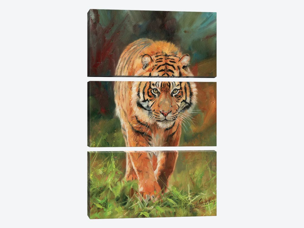 Amur Tiger by David Stribbling 3-piece Canvas Art