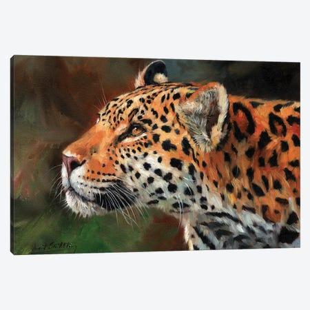 Jaguar Look Canvas Print #STG50} by David Stribbling Canvas Print