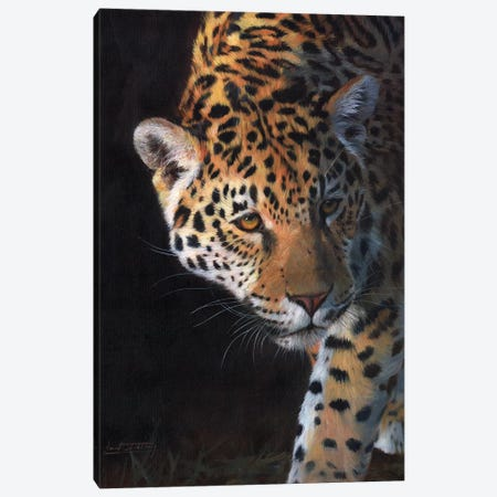 Jaguar Portrait 3-Piece Canvas #STG51} by David Stribbling Art Print