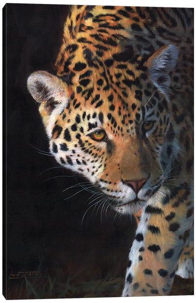 Jaguar Portrait Canvas Art Print