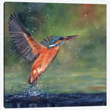 Kingfisher Canvas Print #STG52} by David Stribbling Art Print