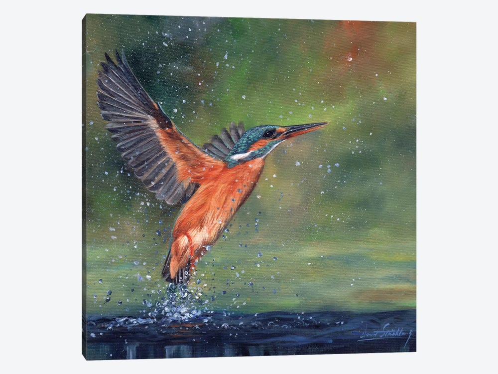 Kingfisher by David Stribbling 1-piece Canvas Wall Art